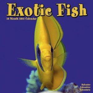 Exotische Fische - Kalender 2011