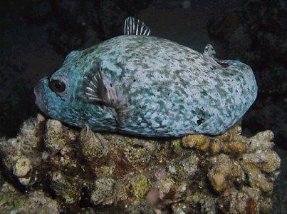 Unterwasserbilder und Urlaubsberichte