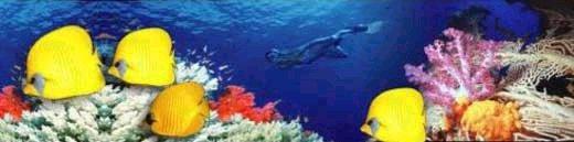 Diving Thailand - Phuket Diving Liveaboards