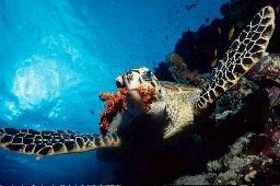UnderwaterVisions.net - Die Plattform der Unterwasserfotografie