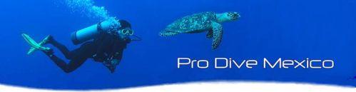 Pro Dive Mexico: Deutsche Tauchschule und Tauchbasis in Yucatan, Mexiko