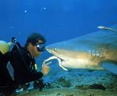 Santa Lucia - Shark Friends Diving Center