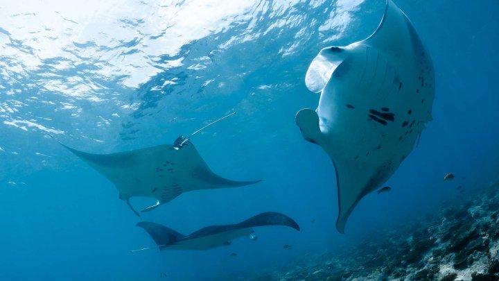 Kuramathi - Rasdhoo Atoll Divers