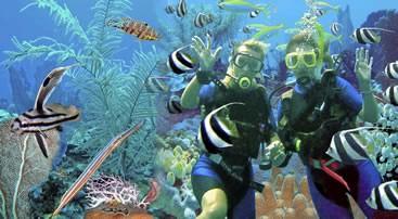 Treasure Divers - Tauchen in der Dominikanischen Republik