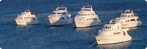 Sea Serpent Fleet Tauchsafari Rotes Meer