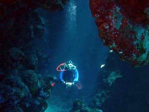 DiveMex - Tauchen an der Riviera Maya, Mexiko