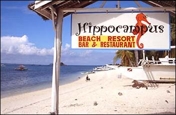 Hippocampus Beach Resort Malapascua