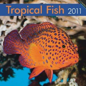 Tropical Fish, Broschürenkalender 2018