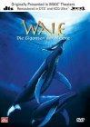 Wale - Giganten der Meere - DVD